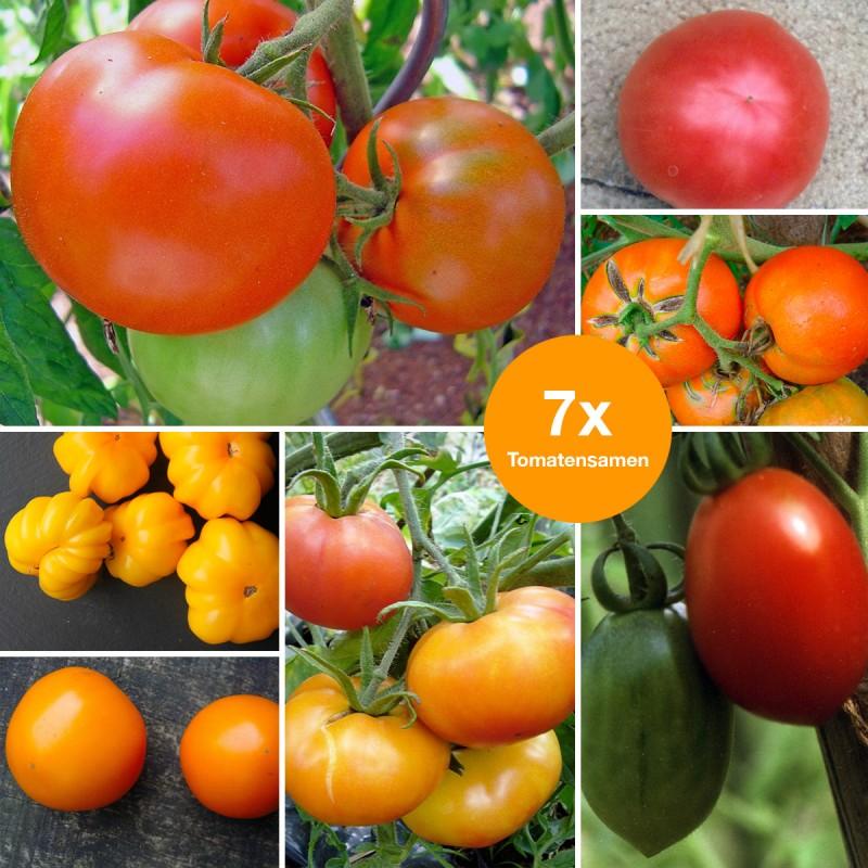 Aktionsset Tomaten