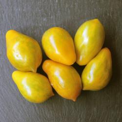 Früchte bei Vollreife
